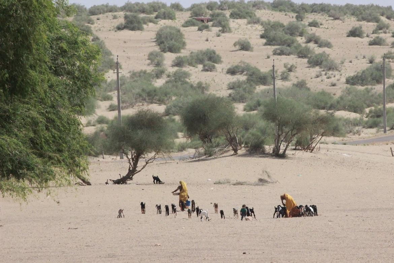 Women herding goats in Girduwala. Photo by Namrata Ginoya/WRI India