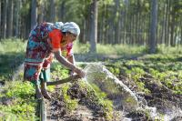 The local labor routed through MGNREGA are used for a variety of conservation activities
